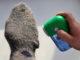 Socken und die lästigen Fusseln
